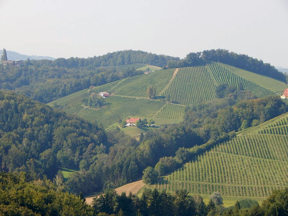Sauvignon Blanc világbajnokság Grazban