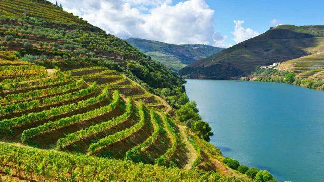 20 éve nem termeltek ilyen kevés bort Portugáliában