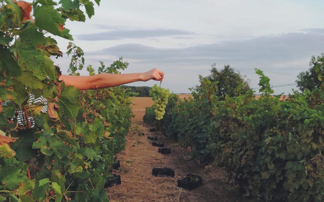 Zöldre vált Bordeaux